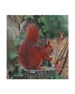 Dyre skive egern 25x26 cm
